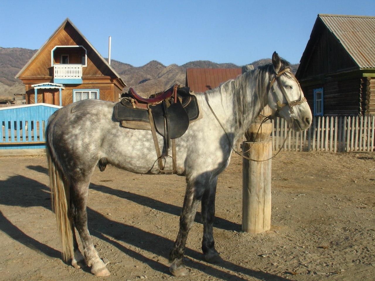 фото всех пород лошадей