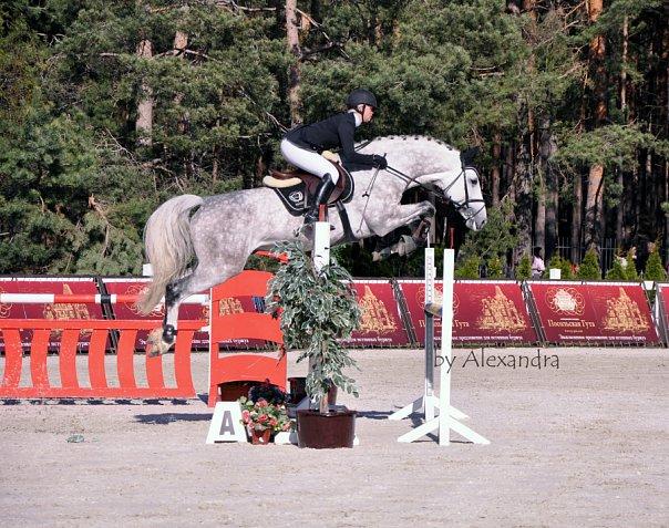 Породы: Голштинская лошадь - О лошадях, КОНОВОД
