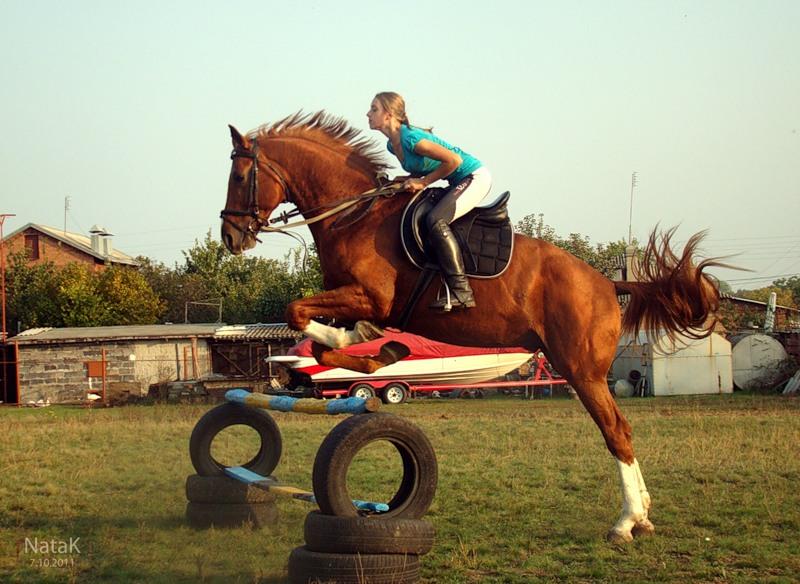 Молодой лошадь считается до