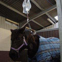 Horse-on-Fluids_july_13