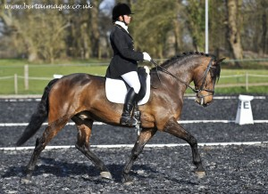 dressage-foundations-1-300x218