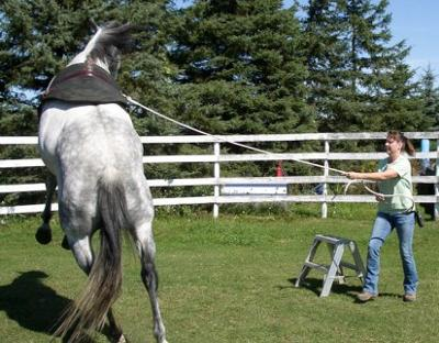 horse-training-advice-from-atlas-21360225