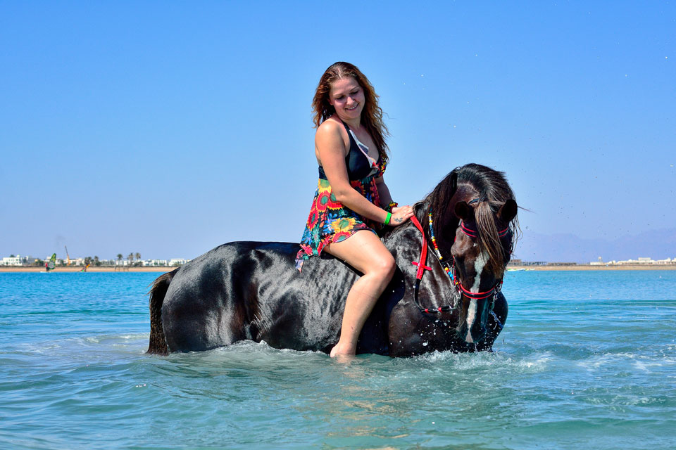 swimming-with-horses-in-sharm