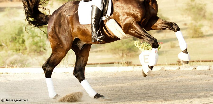 Suspensory-injuries